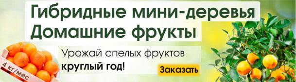 Экодар 147 руб - гибридные мини-деревья